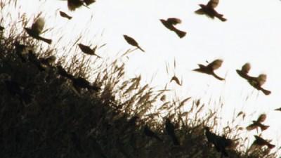 映画「鳥の道を越えて」