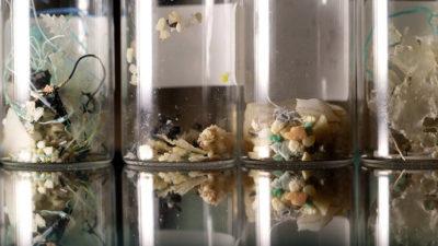 海 消えたプラスチックの謎